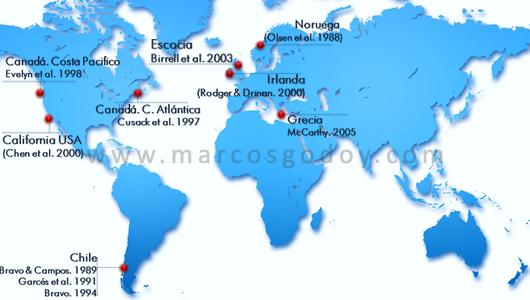 mundial-srsb