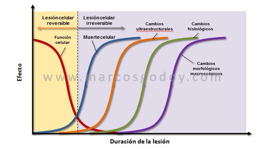 cambios-morfologicos