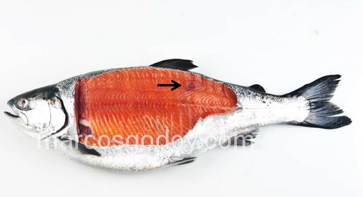 vertebral-compression-fracture-in-coho-salmon-iii