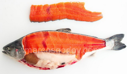 vertebral-compression-fracture-in-coho-salmon-ii