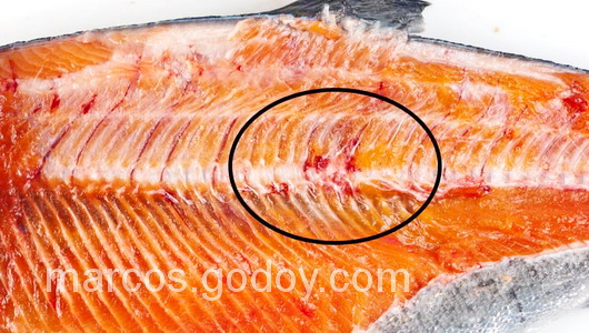vertebral-compression-fracture-in-coho-salmon-iv