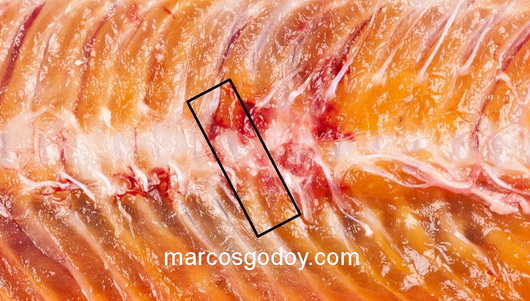 vertebral-compression-fracture-in-coho-salmon-vi